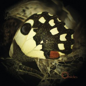 ossicles music for wastelands